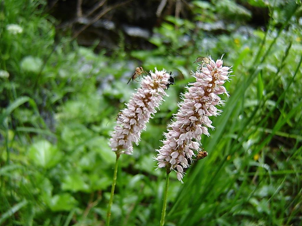 Две орхидейки