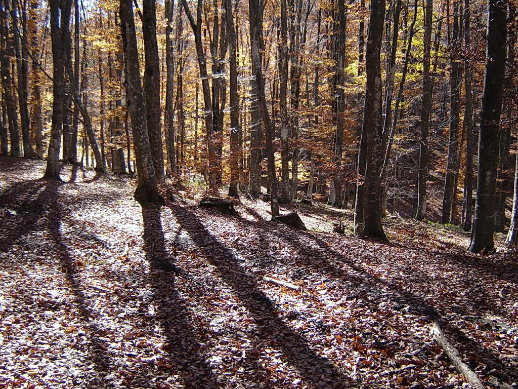 Лес и солнце день чудесный