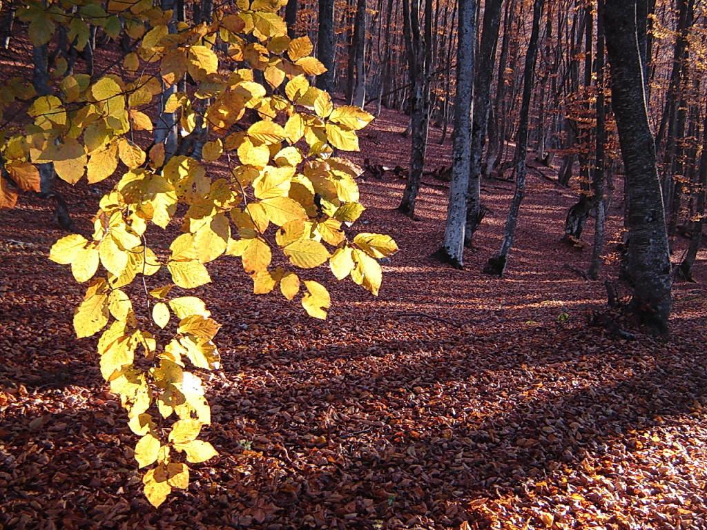 Лес осенний