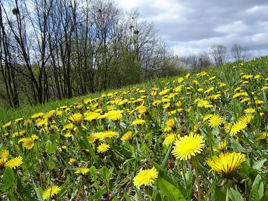 Солнечные веснушки на земле